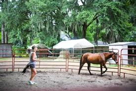 Equus Coaching